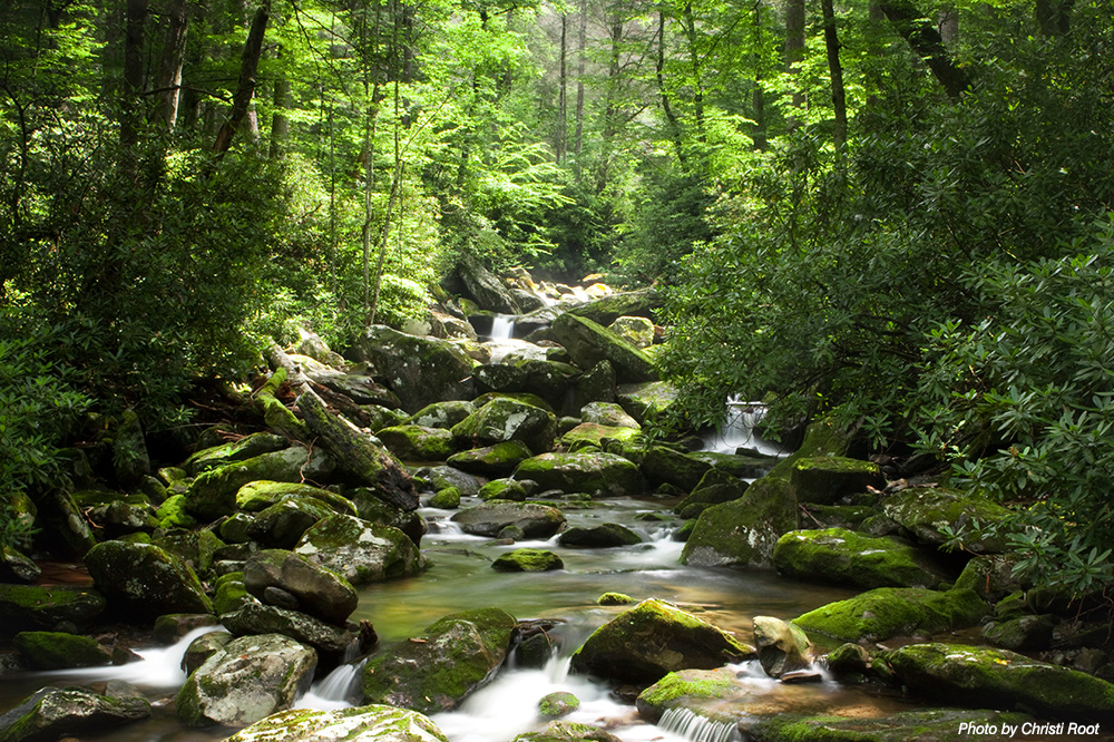 June 1 2 water justice summit at virginia tech the for Mountain flower cabin pigeon forge